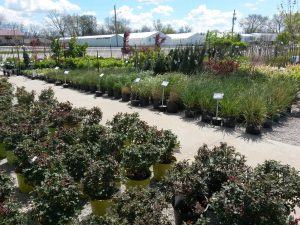 trees and shrubs at Stoplight Market Greenhouse in Butler Missouri