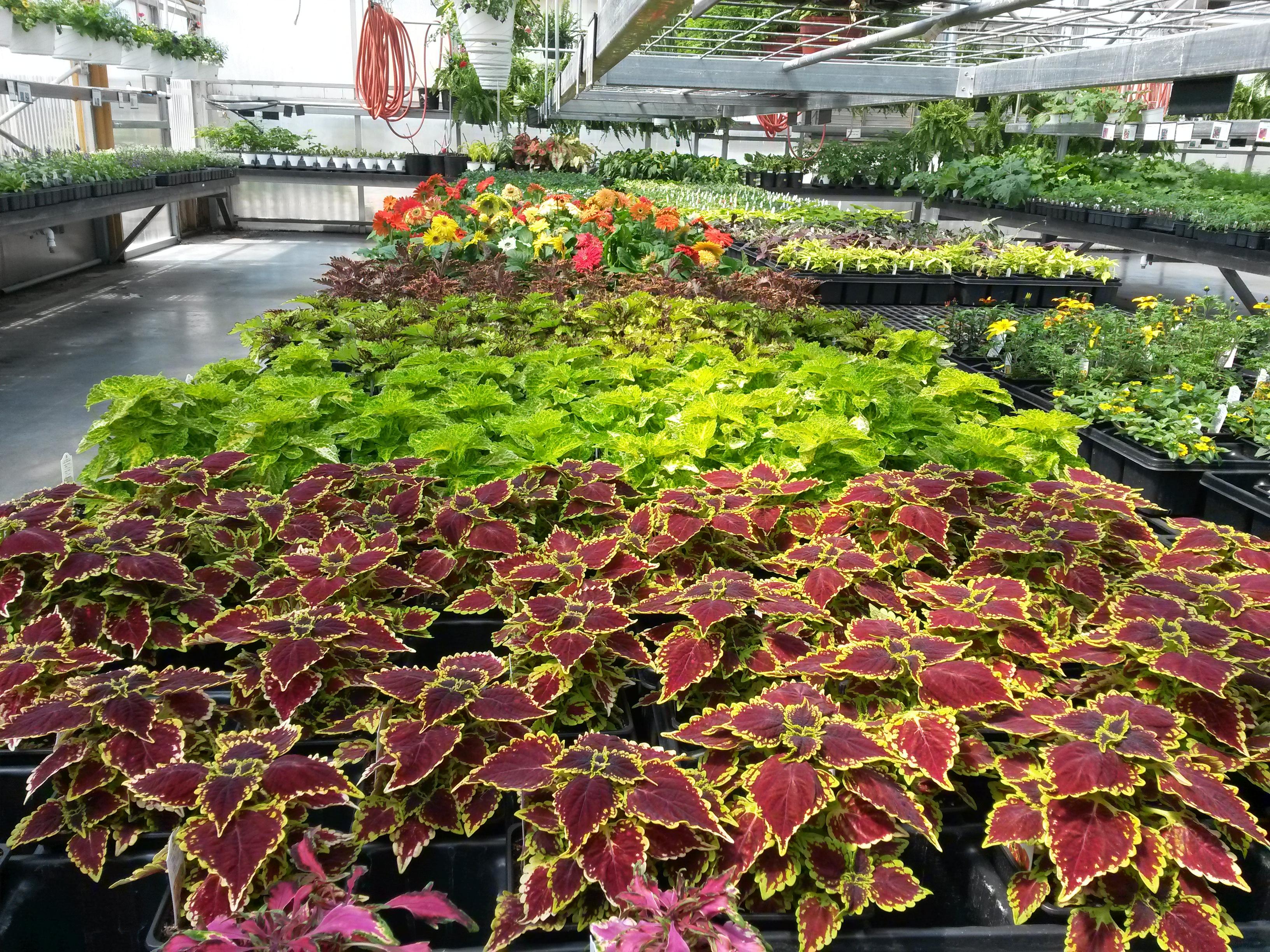 Greenhouse in Butler, MO - Stoplight Market